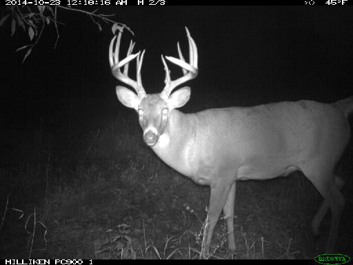 Don't Let a Big-Buck Photo Psych You Out