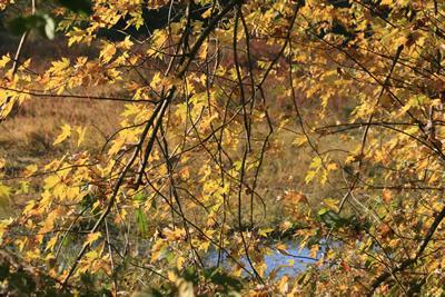 httpswww.outdoorlife.comsitesoutdoorlife.comfilesimport2014importImage2009photo7Decfoliage_46.jpg