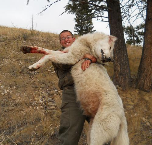 The Year of Canis Lupus: Wolf News in 2011