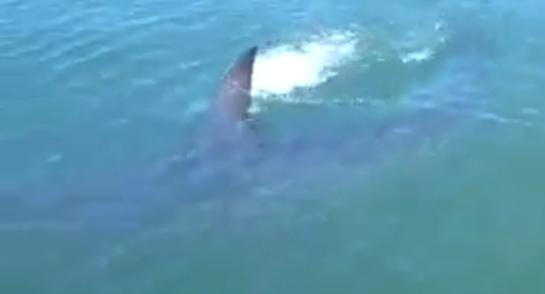 Funny Video: Teens Freak Out When Monster Shark Eats Their Catch
