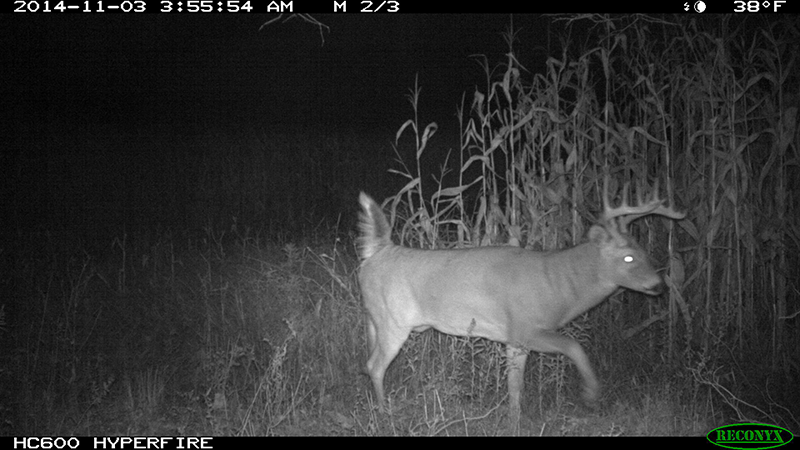 Whitetails: It's Game Time for the Rut