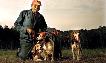The Vanishing Legacy of Southern Rabbit Hunting