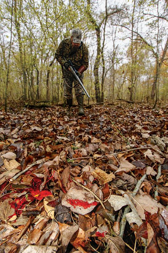 How to Blood Trail a Deer Using Basic Forensics