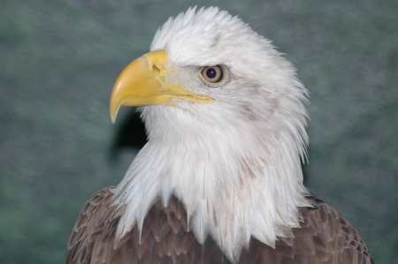 Hunters Don't Shoot Eagles