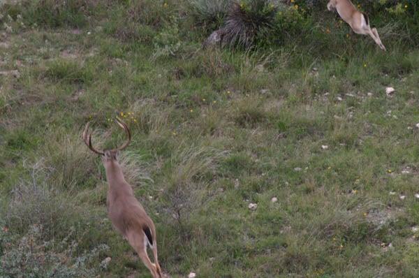 httpswww.outdoorlife.comsitesoutdoorlife.comfilesimport2014importImage2010photo30010FordRanch_133.jpg