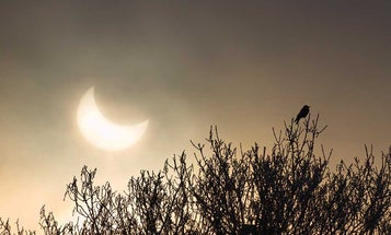 How to Hunt the Eclipse on August 21 This Year