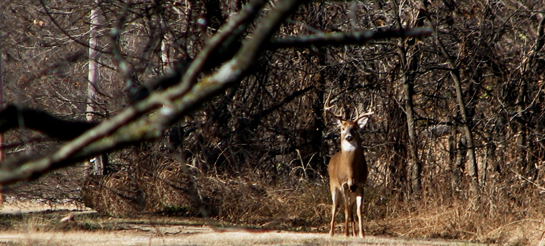 Debate: Which State has the Toughest Deer in the Country?