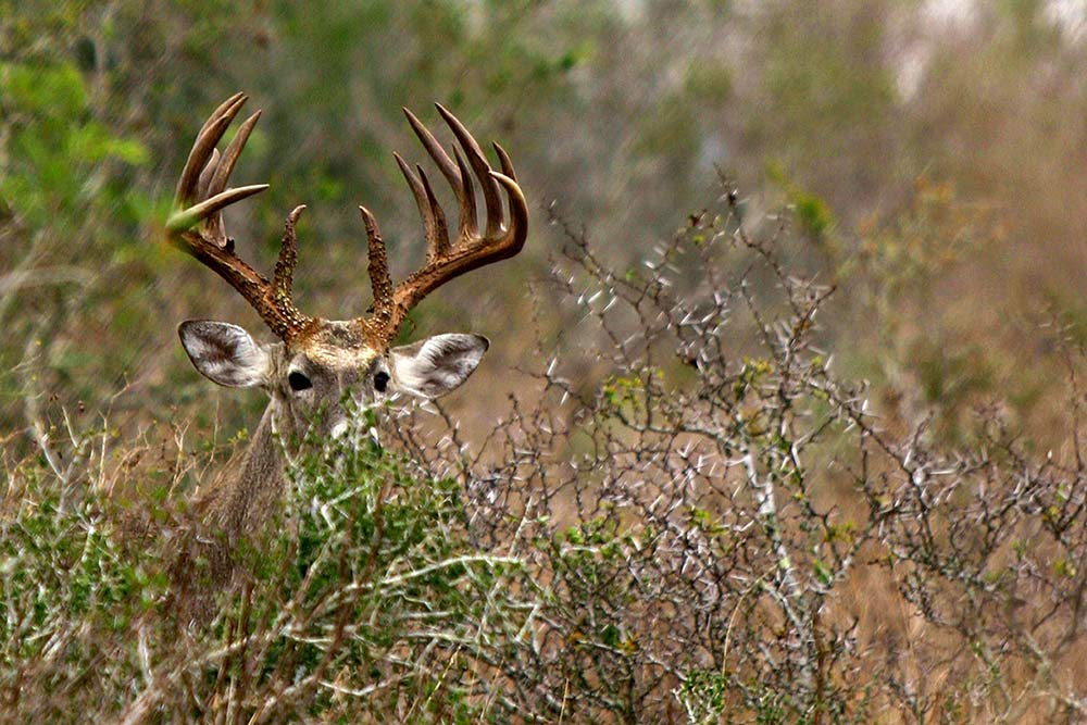 2017 State-By-State Deer Hunting Forecast