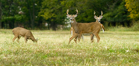 Seven Things to Know About Temperature and Deer Activity
