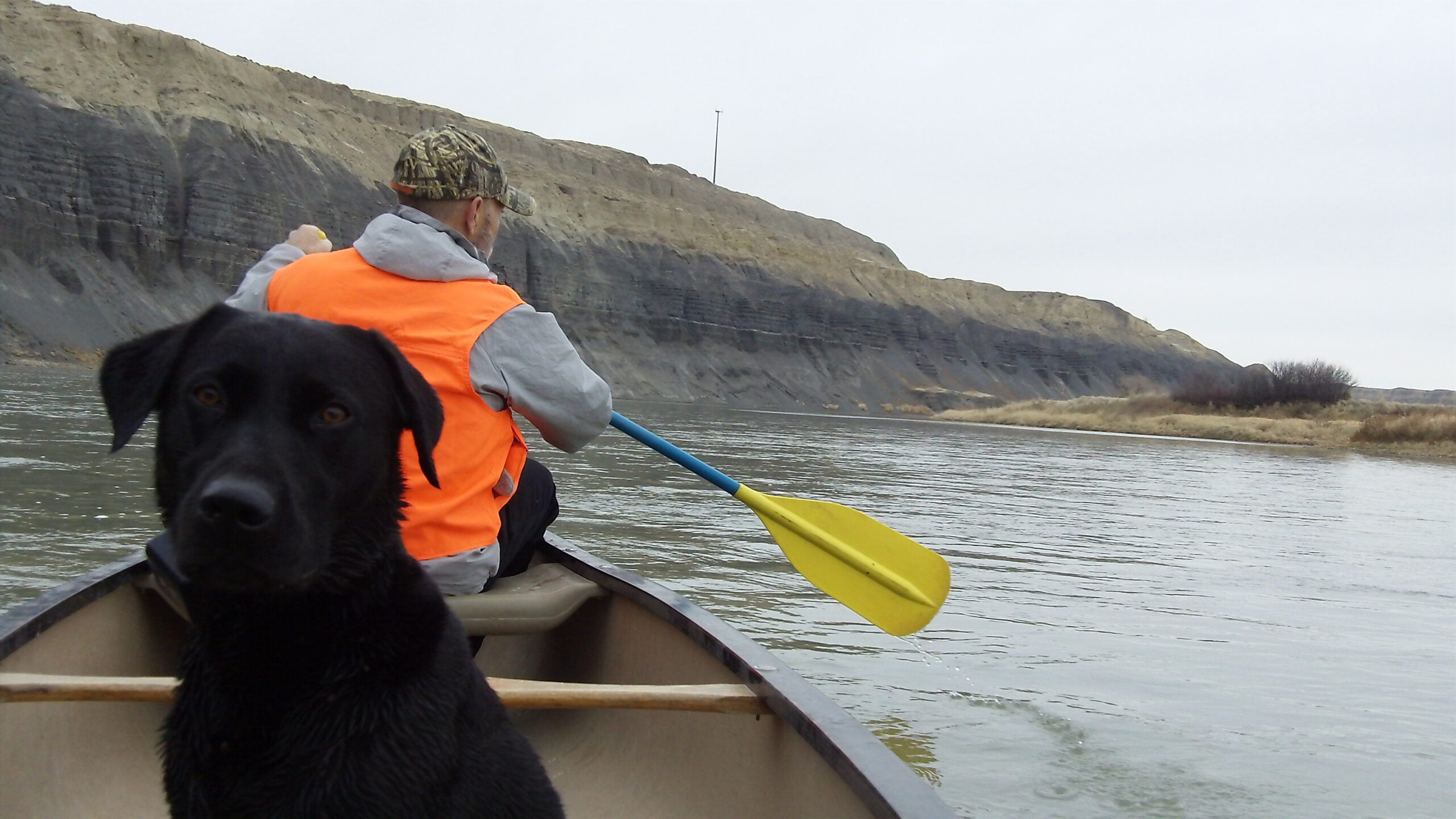 How to Train Dogs to Ride in Boats