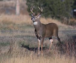 Are We Overlooking the Biggest Threat to Deer and Deer Hunting?