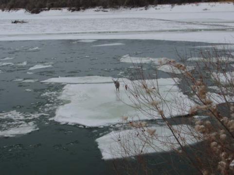 httpswww.outdoorlife.comsitesoutdoorlife.comfilesimport2013images20100923_Ice_Flow_Buck_2_0_0.jpg
