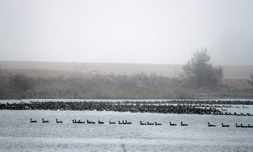 6 Early-Season Duck and Goose Scouting Tips from a Master Waterfowler