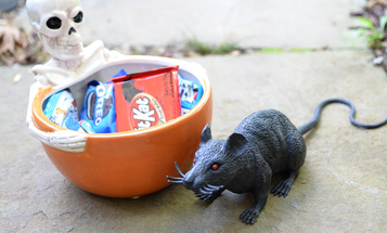 A Parent's Survival Guide to Halloween
