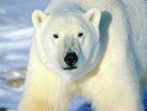 """Polar"