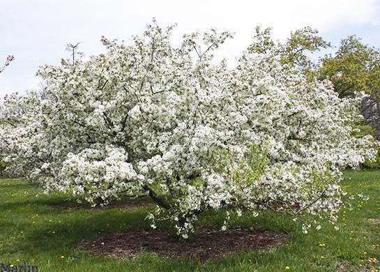 httpswww.outdoorlife.comsitesoutdoorlife.comfilesimport2014importBlogPostembedOct_19_-_Gaylord_Forest_Management_Unit_Crabapple_Planting.jpg