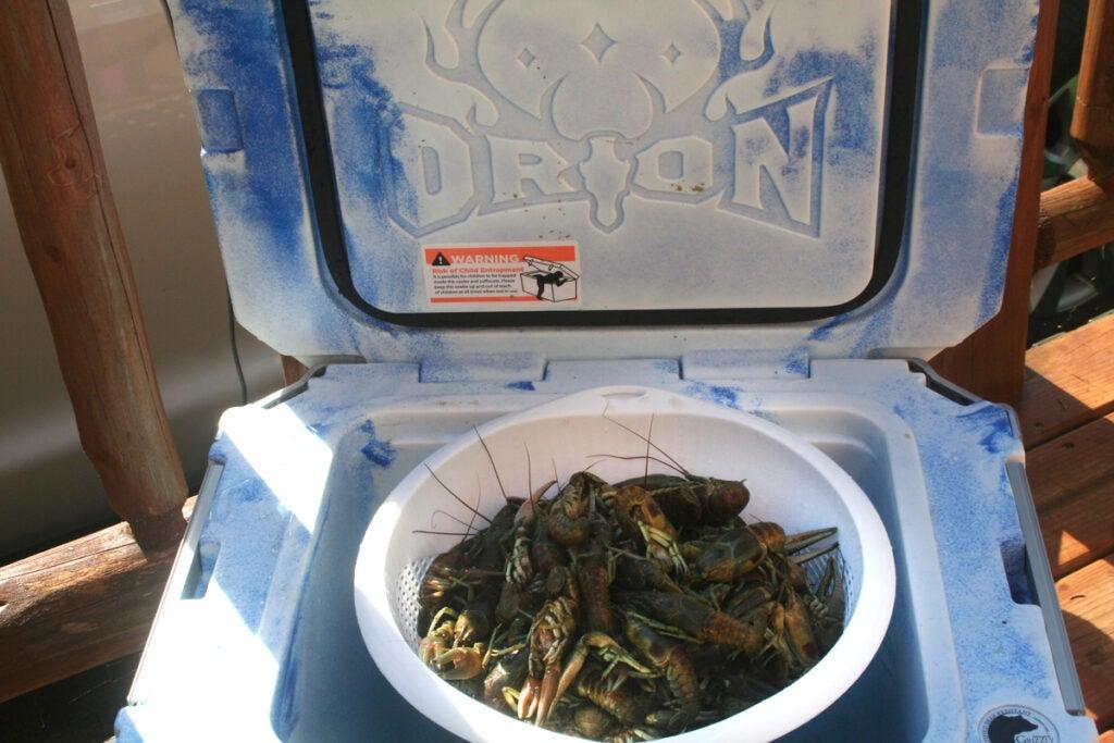freshwater crayfish cooler