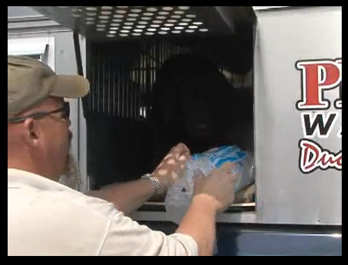 VIDEO: How to Keep Pup Cool
