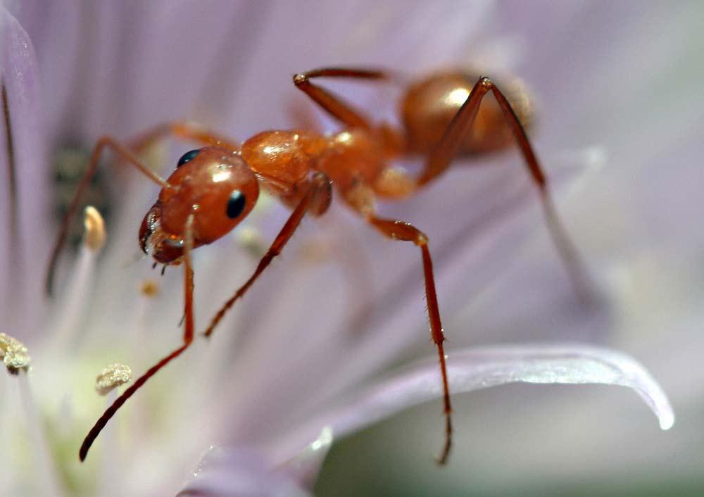 """""""ants"""