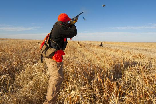 Bird Hunting: Wingshooting's 7 Deadly Sins