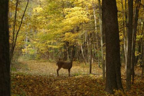 httpswww.outdoorlife.comsitesoutdoorlife.comfilesimport2014importImage2009photo7Decfoliage_8.jpeg