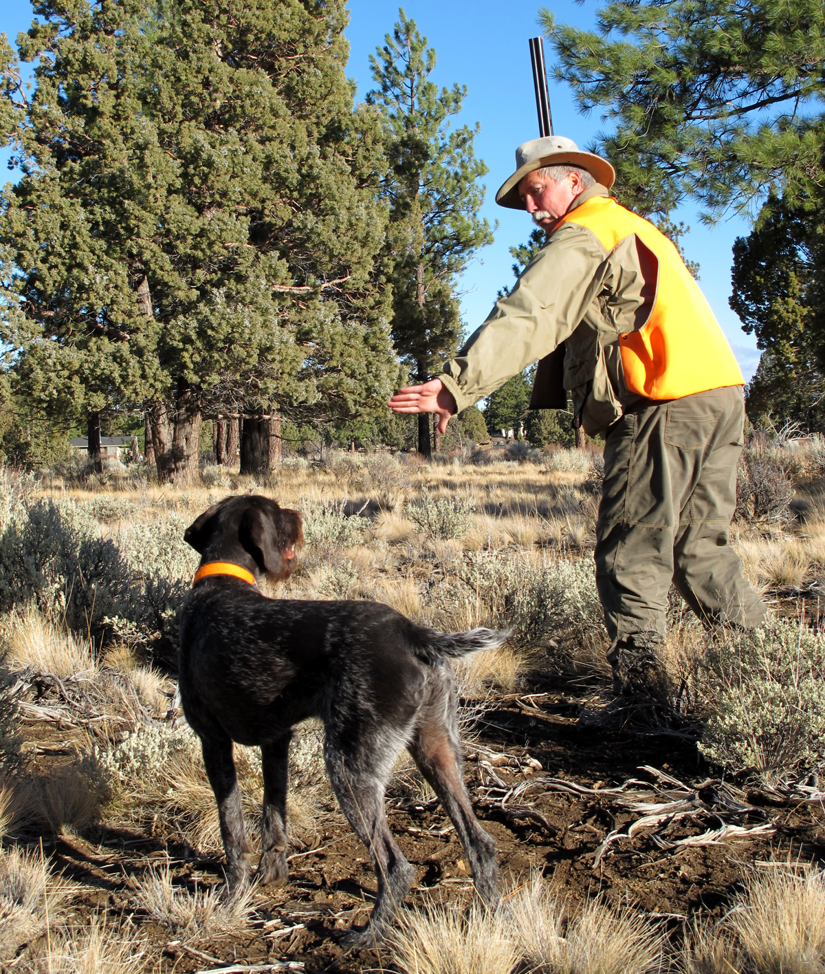 Breaking Bad: How to Train Your Dog to Steady on Real Birds