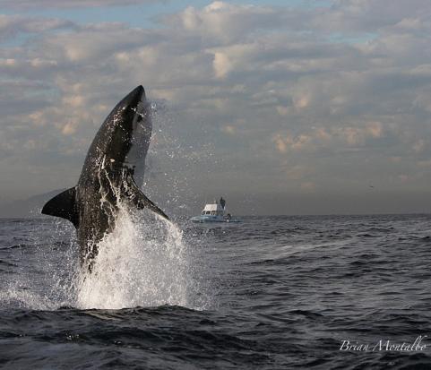 httpswww.outdoorlife.comsitesoutdoorlife.comfilesimport2014importImage2009photo62._shark-1.jpg