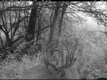 Target Big Bucks Video: Don't Mug Your Deer