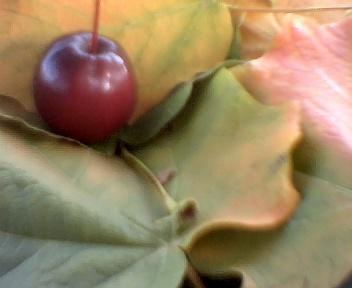 httpswww.outdoorlife.comsitesoutdoorlife.comfilesimport2014importImage2009photo7Decfoliage_50.jpeg