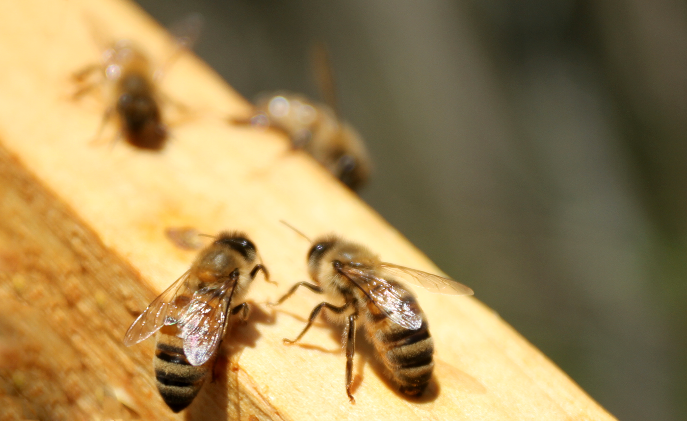 Survival Skills: 4 Tips for Treating Insect Stings