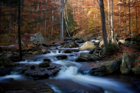 httpswww.outdoorlife.comsitesoutdoorlife.comfilesimport2014importImage2009photo7Decfoliage_7.jpg