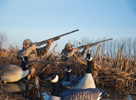 Shotgun Tips: How to Shoot From a Layout Blind