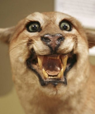 More Bad Taxidermy: 25 Ugly Mounts from the Web