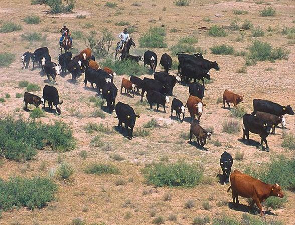 httpswww.outdoorlife.comsitesoutdoorlife.comfilesimport2013images20100823_Cattle_round_up_0.jpg