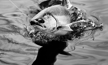 Indiana DNR to Suspend Lake Michigan Chinook Salmon Stocking in 2017
