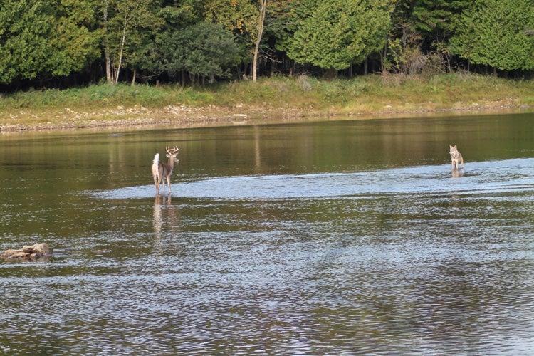 httpswww.outdoorlife.comsitesoutdoorlife.comfilesimport2013images2012109_1.jpg