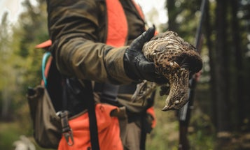 10 Next-Level Ruffed Grouse Hunting Tips