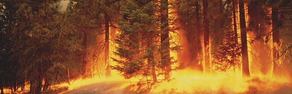 Surviving a Wildfire