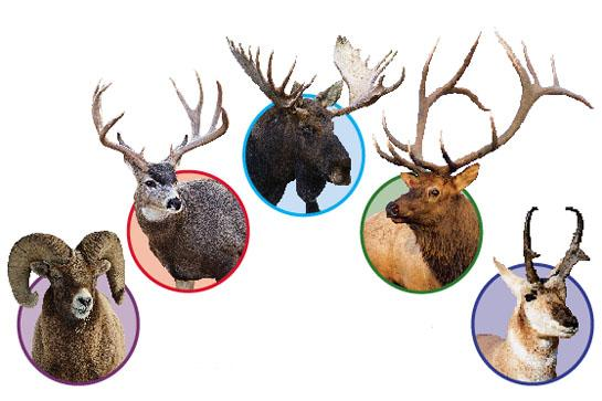 Dream Hunts: 5 West Big-Game Tags You Need to Apply for This Season