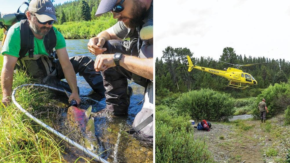 alaskan salmon researchers taku river watershed