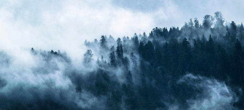 cloudy foggy forest mountain