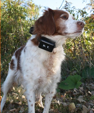 E-Collar Review: OL Tests the Best Electronic Dog Collars