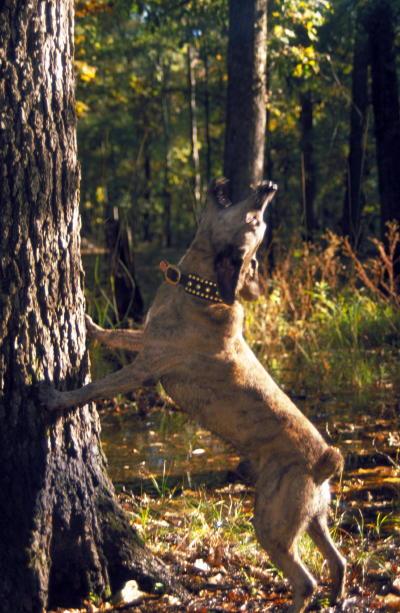 httpswww.outdoorlife.comsitesoutdoorlife.comfilesimport2014importImage2008legacyoutdoorlifesutton_bushytails_013.jpg