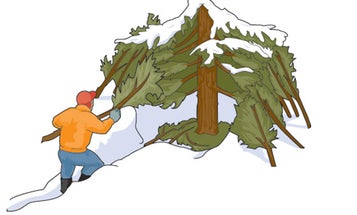 Winter Survival Tip: Hole Up in a Tree Well