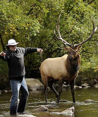 Photos: Fly Fishing With Elk