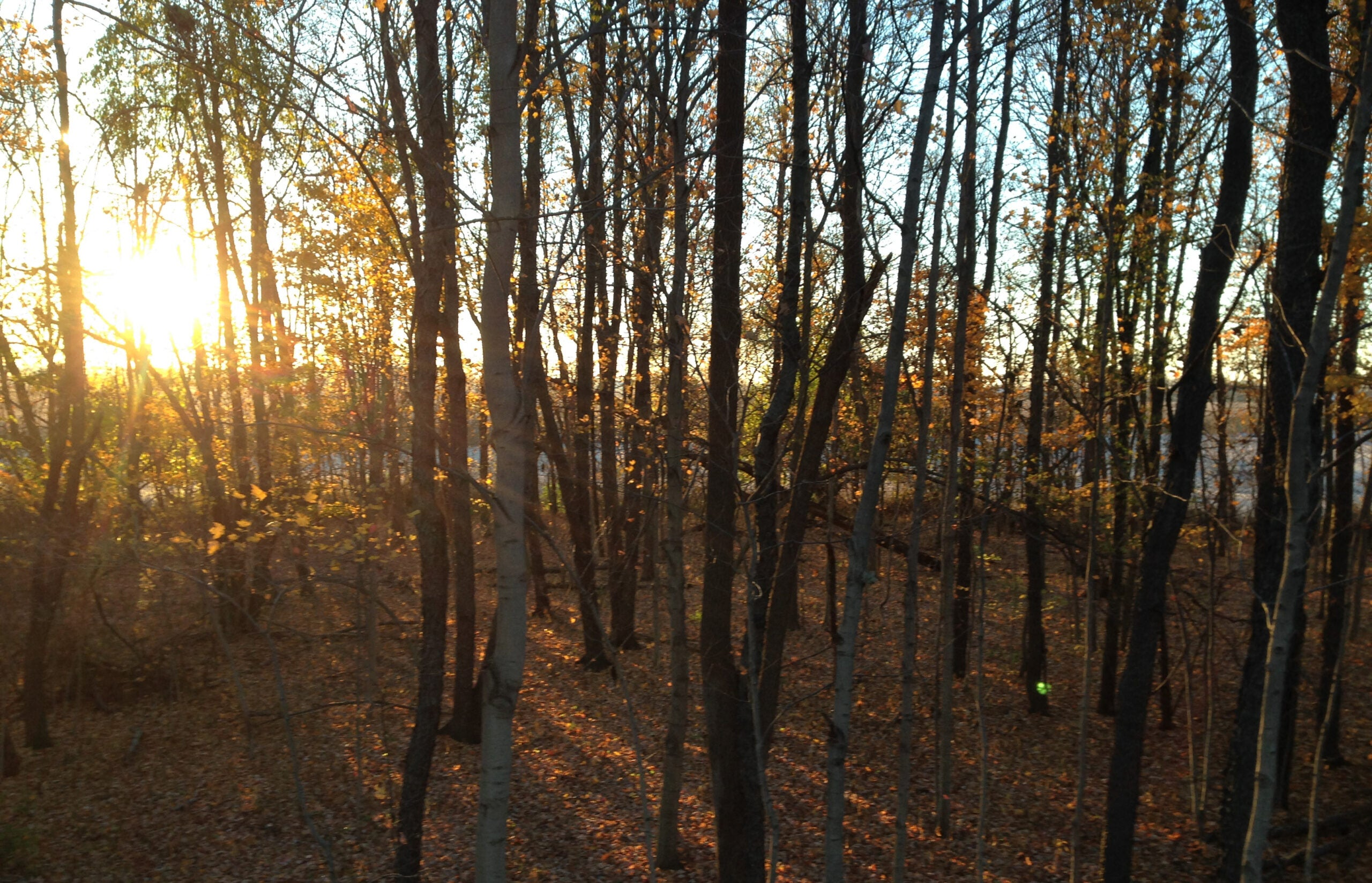 Hunting and Management: Ways to Avoid Conservation Tunnel Vision