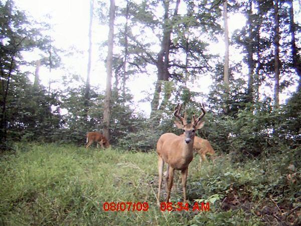 httpswww.outdoorlife.comsitesoutdoorlife.comfilesimport2014importImage2009photo76_11_point_buck_0.jpg