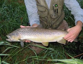 httpswww.outdoorlife.comsitesoutdoorlife.comfilesimport2014importImage2007legacyoutdoorlife103-32TroutBrown.jpg