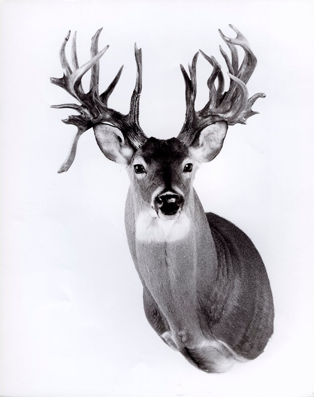 mcmurray buck
