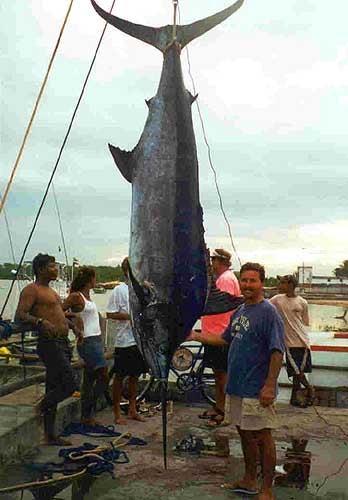 httpswww.outdoorlife.comsitesoutdoorlife.comfilesimport2014importImage2010photo6rio_ocean_Fishing_1.jpg
